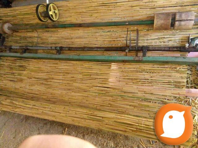 TRSKA pletena, presovana i zelena