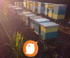 Pčelinja društva na LR ramu
